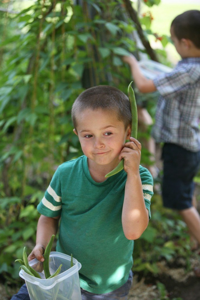 {In the Garden} How to Grow Beans - Olly on the Bean Phone
