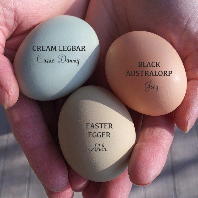 Egg Color by Breed