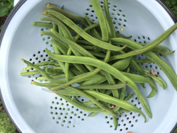 {In the Garden} How to Runner Beans